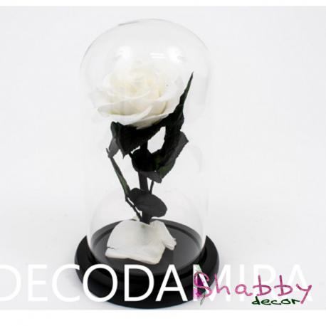 Trandafir criogenat alb in cupola