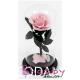 Trandafir criogenat roz in cupola