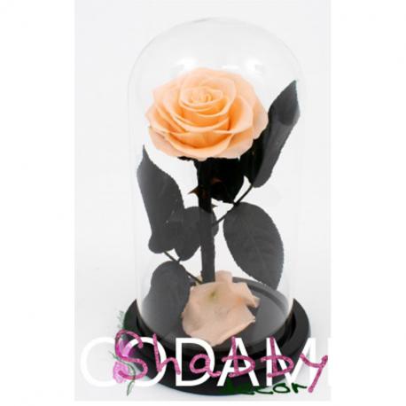 Trandafir criogenat somon in cupola